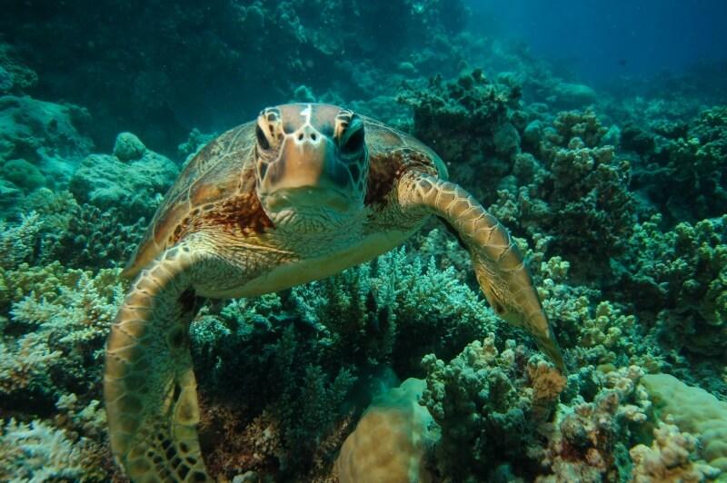 Veľký bariérový útes pri Austrálii a nasratá korytnačka