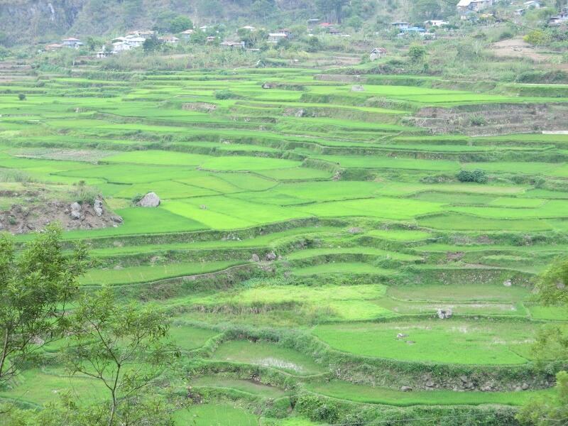 ryžové terasy na Filipínach